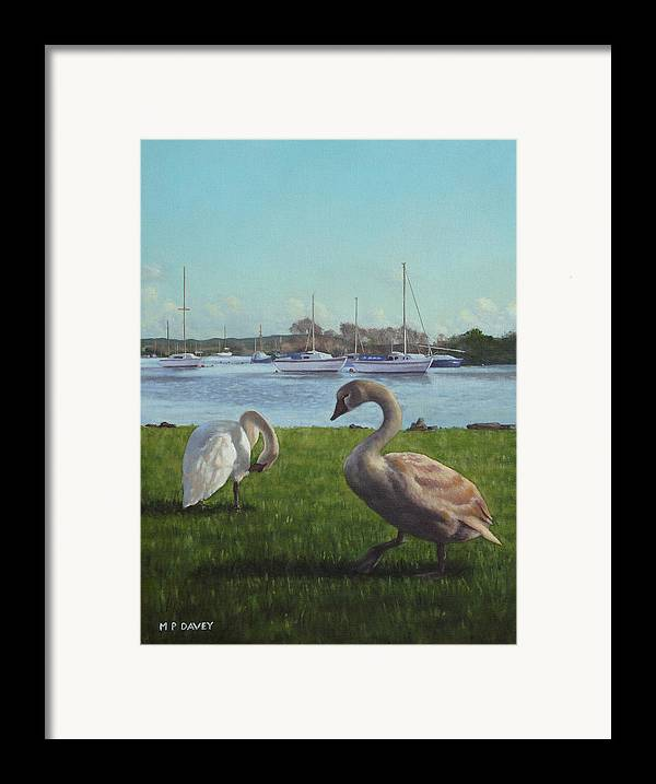 Christchurch Framed Print featuring the painting swans at Christchurch harbour by Martin Davey