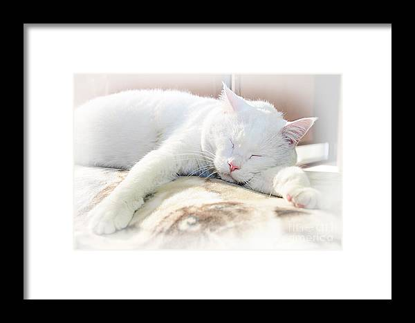 Andee Design Cats Framed Print featuring the photograph Sweet Dreams by Andee Design