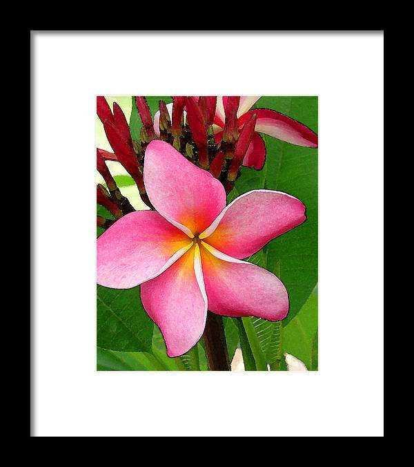 Plumeria Framed Print featuring the photograph Sweet Fragrance by James Temple