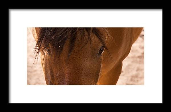 Horse Framed Print featuring the photograph Sweet Horse Face by Natalie Rotman Cote