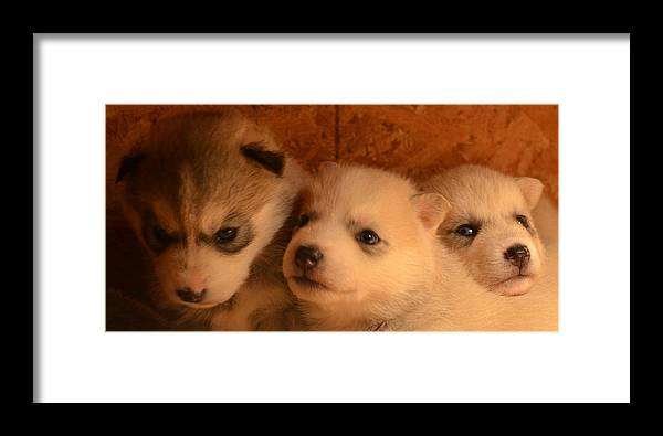 Puppies Framed Print featuring the photograph Sweetness II by Dorothea Hanson