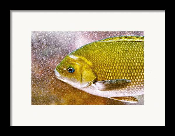 Fish Picture Framed Print featuring the photograph Swimming Fish by Artist and Photographer Laura Wrede
