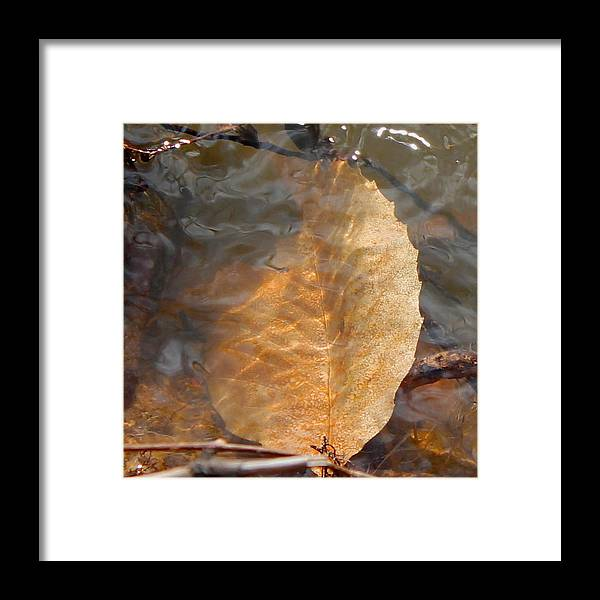 Leaf Framed Print featuring the photograph Swimming Leaf by Candice Trimble