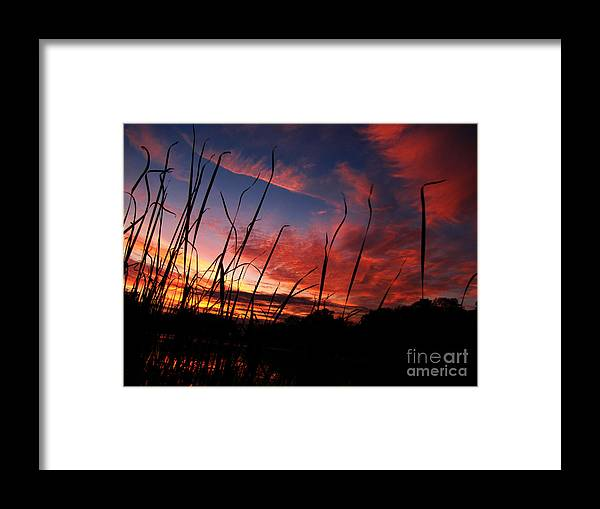 Swirl Framed Print featuring the photograph Swirl by Ron Tackett