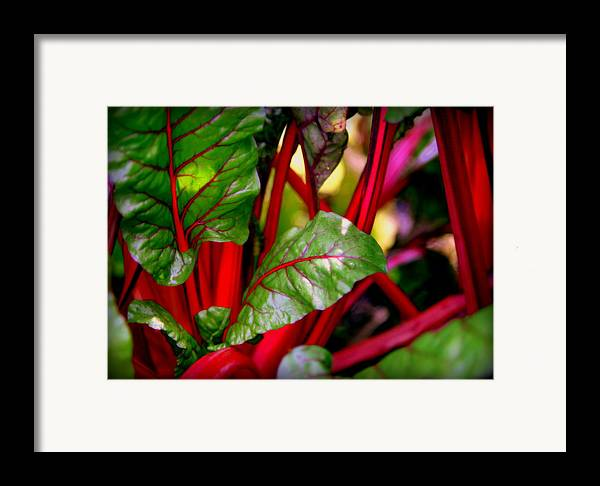Kettuce Framed Print featuring the photograph Swiss Chard Forest by Karen Wiles