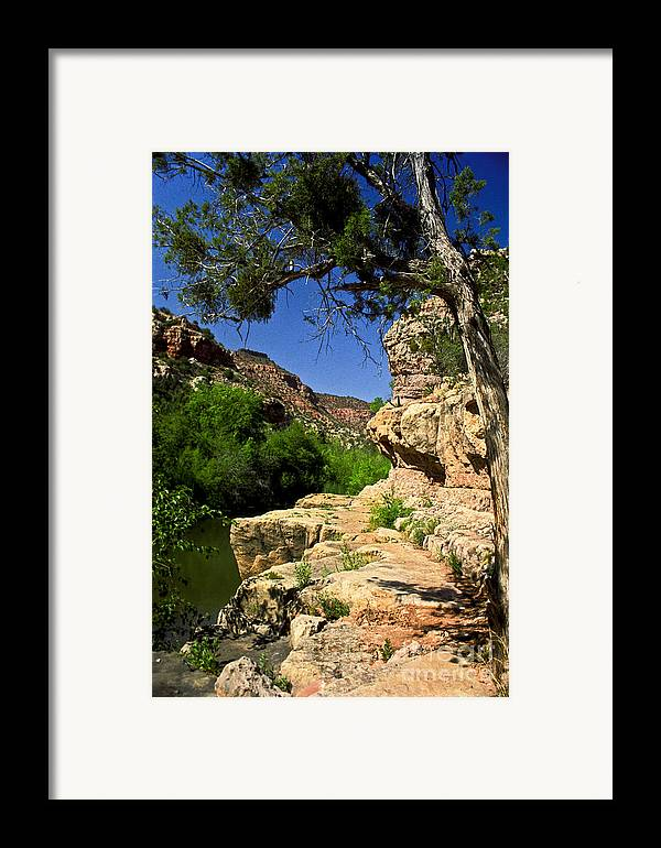 Arizona Framed Print featuring the photograph Sycamore Canyon by Kathy McClure