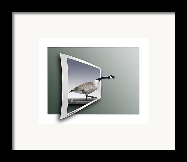 2d Framed Print featuring the photograph Take A Gander by Brian Wallace