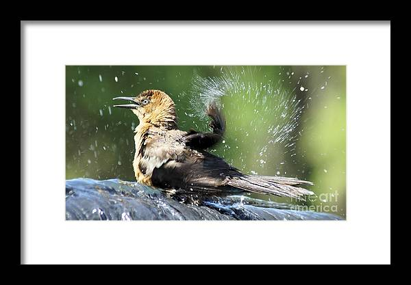 Bird Framed Print featuring the photograph Taking A Bath. by Evelyn Hill