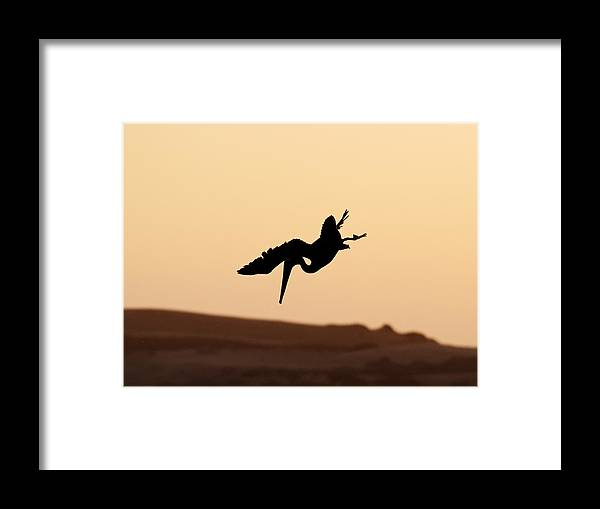United States Framed Print featuring the photograph Taking A Dive by Darin Volpe
