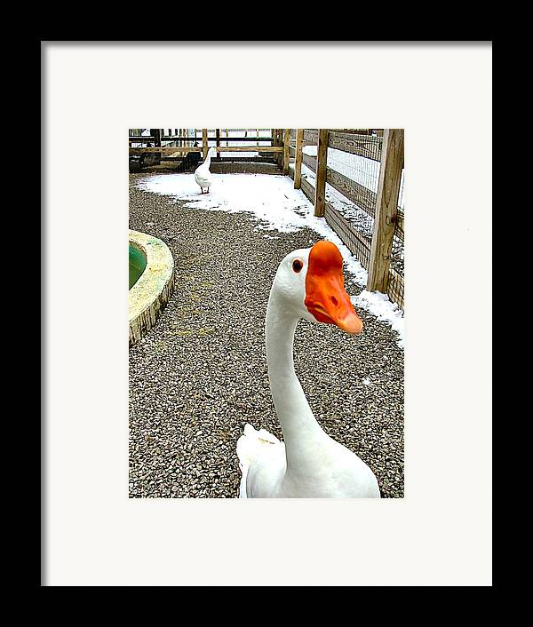 Geese Framed Print featuring the photograph Taking A Gander... by Julie Dant