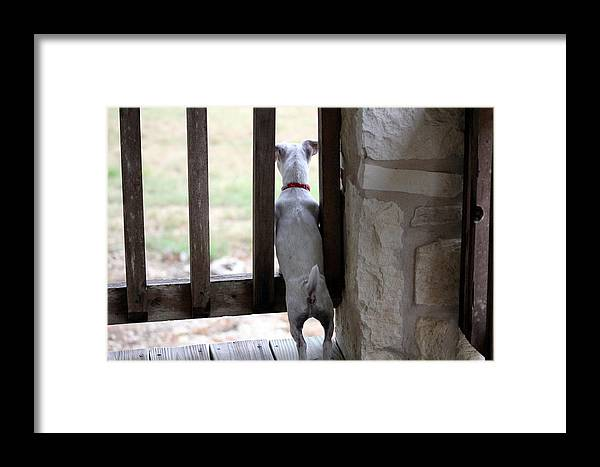 Dog Framed Print featuring the photograph Taking A Peek by Kristie Briones