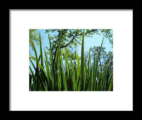 Tall Grass Framed Print featuring the photograph Tall Grass by Dana Doyle