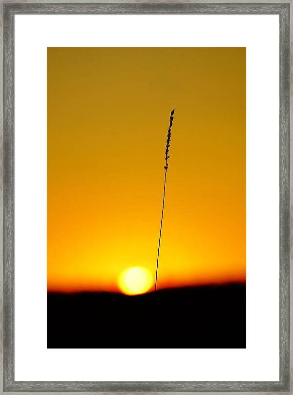 Tall Grass Silhouette On Tranquil Scene Framed Print Featuring The Photograph Tall Grass Silhouette At Sunset By Sylvie Corriveau
