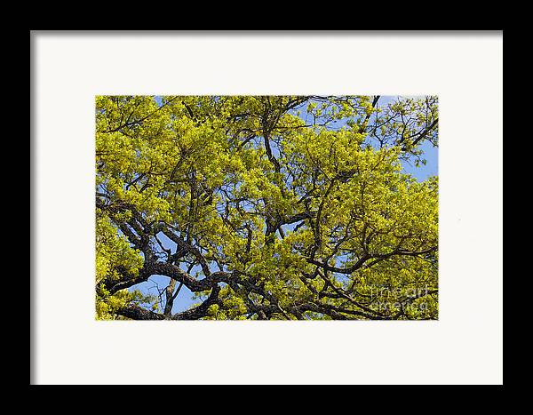 Leaves Framed Print featuring the photograph Tangled In Time by Pamela Gail Torres