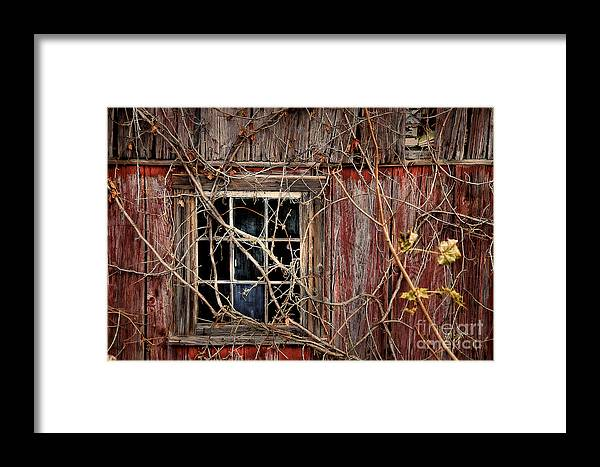 Barn Framed Print featuring the photograph Tangled Up In Time by Lois Bryan