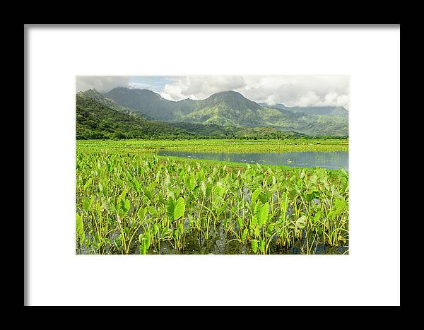 Agriculture Framed Print featuring the photograph Taro Fields In Hanalei National by Michael Defreitas