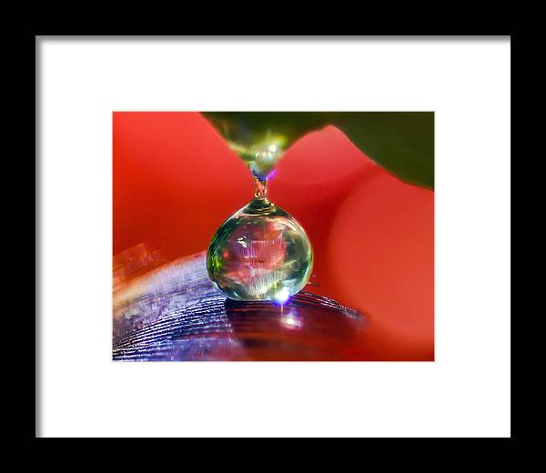 Feathers Framed Print featuring the photograph Taste Your Desire by Kenneth Haley