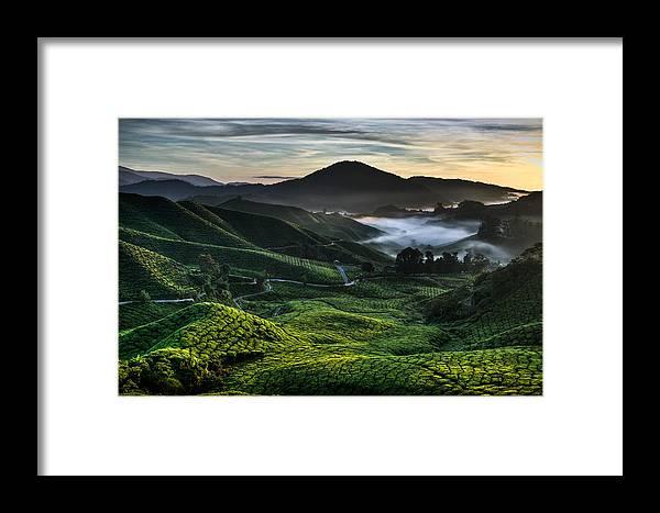 Tea Plantation Framed Print featuring the photograph Tea Plantation At Dawn by Dave Bowman