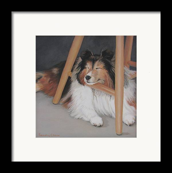 Shetland Sheepdog Framed Print featuring the painting Teddy In My Studio by Sandra Chase