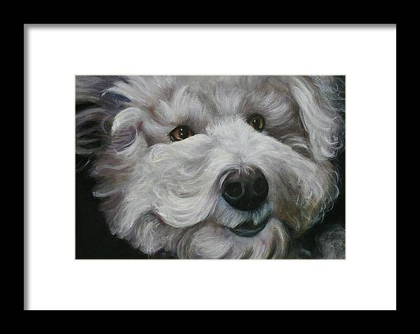 Dogs Framed Print featuring the painting Teddy The Bichon by Melinda Saminski