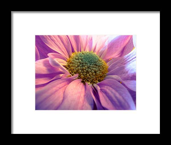 Jeanette Wygant Framed Print featuring the photograph Tender Daisy by Jeanette Wygant