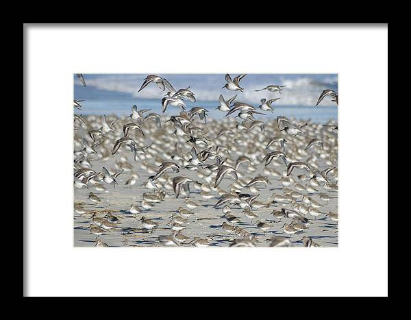 Birds Framed Print featuring the photograph Test Drive by Greg Graham
