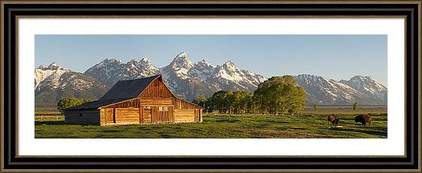 Teton Barn with Bison by Aaron Spong