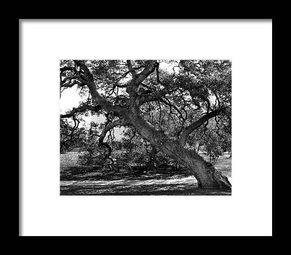 Tree Framed Print featuring the photograph Texas Capitol Tree by Jerry Cook