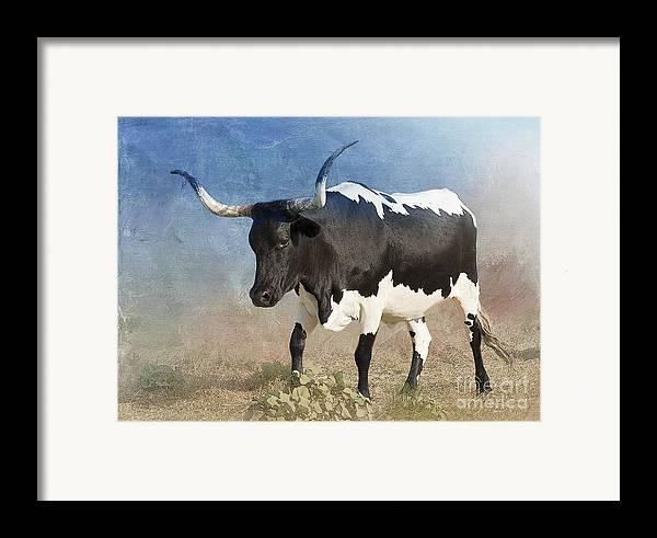Texas Longhorn Framed Print featuring the photograph Texas Longhorn #7 by Betty LaRue