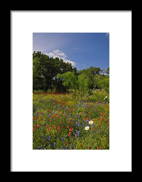 Wildflowers Framed Print featuring the photograph Texas Spring Spectacular by Lynn Bauer