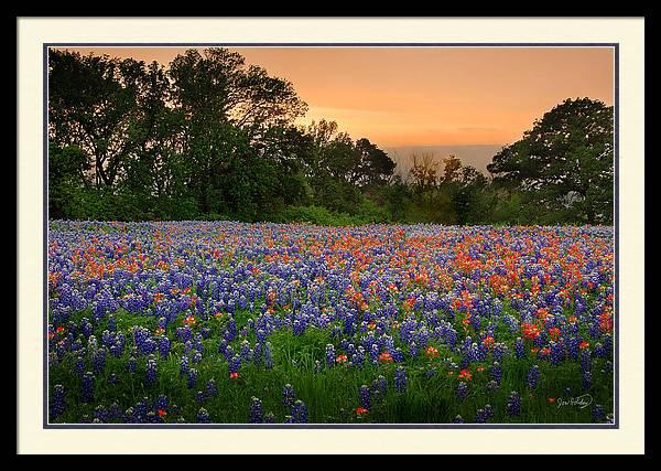 Texas Sunset - Bluebonnet Landscape Wildflowers by Jon Holiday