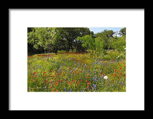 Wildflowers Framed Print featuring the photograph Texas Wildflower Medley by Lynn Bauer