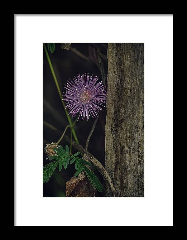 Freshness Framed Print featuring the photograph Thailand Purple Wild Flowers by David Longstreath