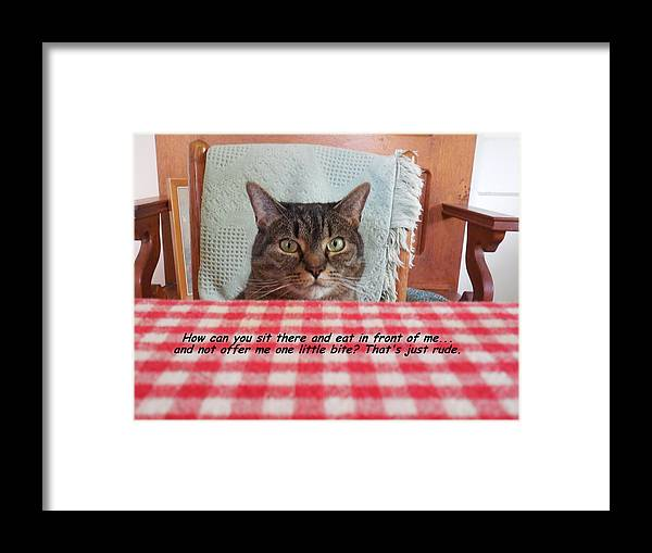 Cat Framed Print featuring the photograph That's Just Rude by Diannah Lynch