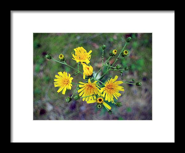 Ant Framed Print featuring the photograph The Ants Way by Viacheslav Savitskiy