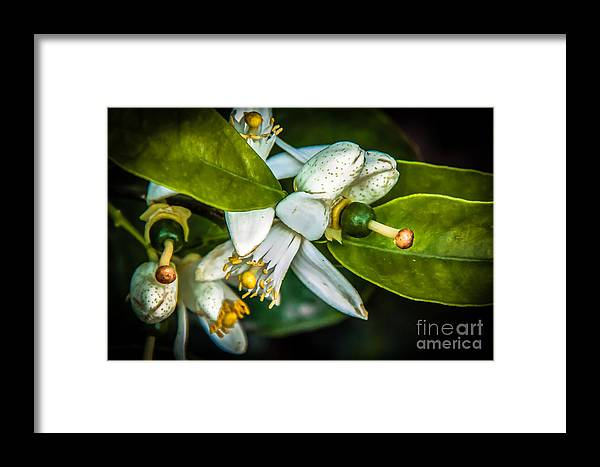 Arizona Framed Print featuring the photograph The Baby by Robert Bales