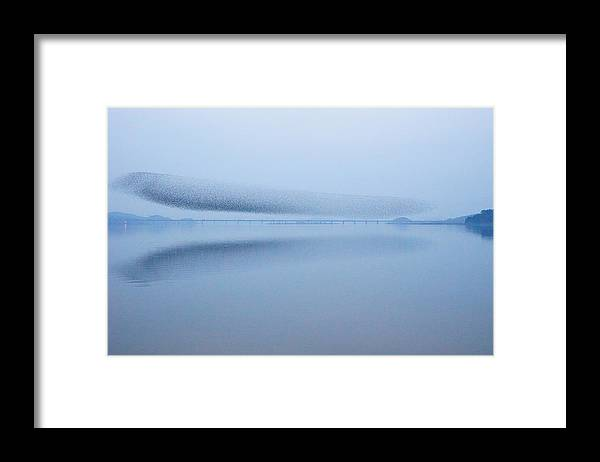 Scenics Framed Print featuring the photograph The Baikal Teals 2 by Penboy