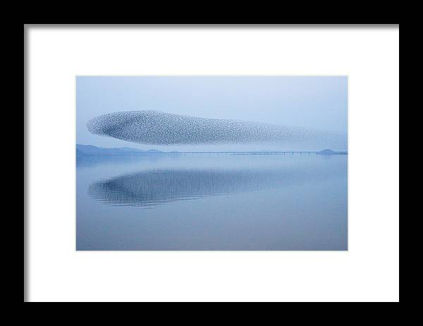 Scenics Framed Print featuring the photograph The Baikal Teals by Penboy