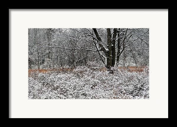 Winter Framed Print featuring the photograph The Beauty Of Winter by Aimee L Maher Photography and Art Visit ALMGallerydotcom