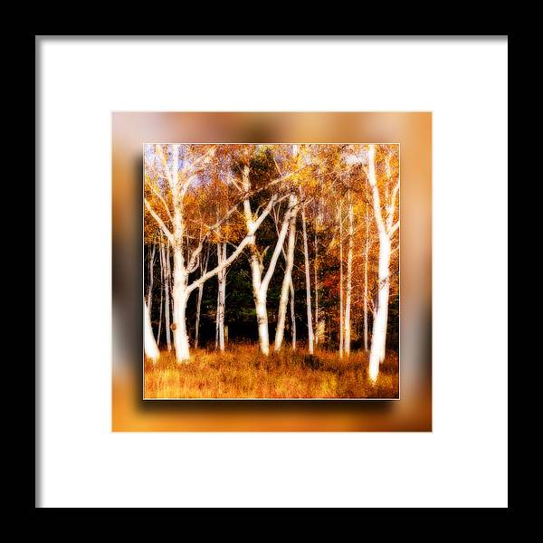 White Birch Framed Print featuring the photograph The Birches by Don Powers