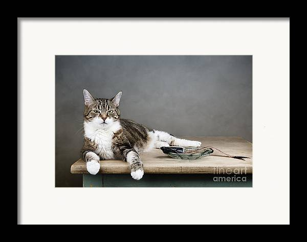 Cat Framed Print featuring the photograph The Boss by Nailia Schwarz
