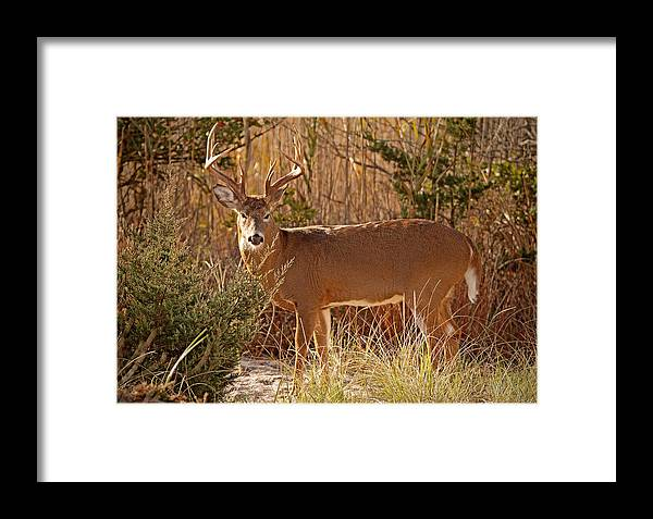 The Buck Stops Here Framed Print featuring the photograph The Buck Stops Here by Melanie Melograne