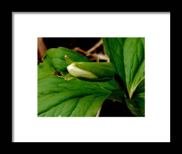 Trillium Framed Print featuring the photograph The Budding Goddess by Wild Thing