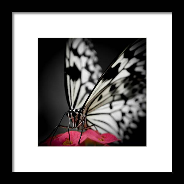 Jen Baptist Framed Print featuring the photograph The Butterfly Emerges by Jen Baptist