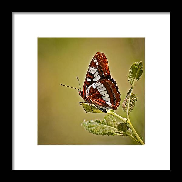 Bugs Framed Print featuring the photograph The Butterfly by Ernie Echols