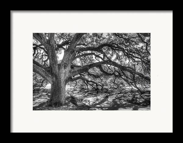 Tree Framed Print featuring the photograph The Century Oak by Scott Norris