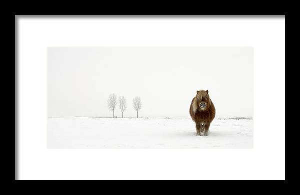 Horse Framed Print featuring the photograph The Cold Pony by Gert Van Den