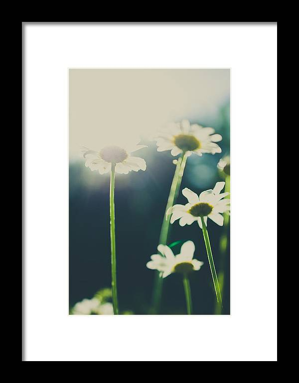 Spring Framed Print featuring the photograph The Color Of Spring by Chance Beaver