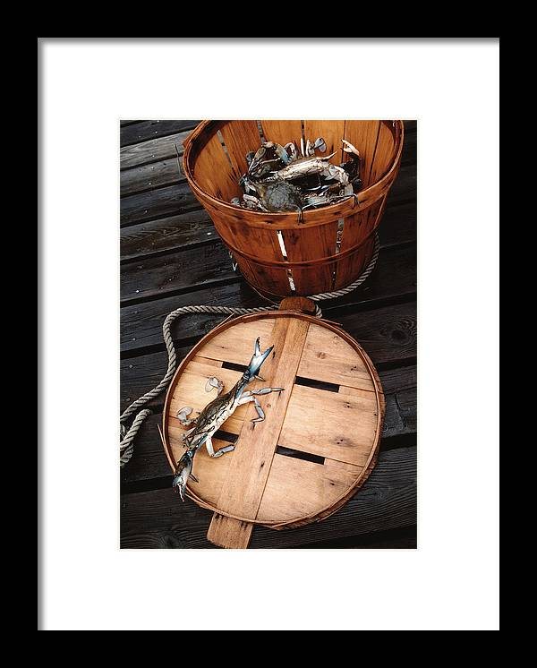 Crab Framed Print featuring the photograph The Cranky Crab by Skip Willits