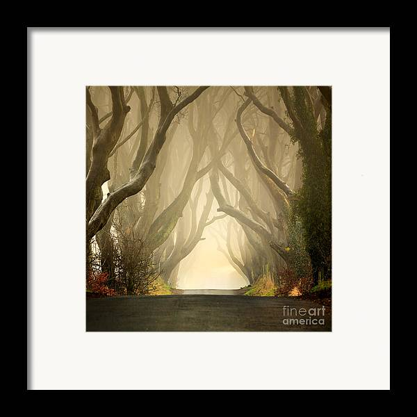 Beech Framed Print featuring the photograph The Dark Hedges 2011 by Pawel Klarecki